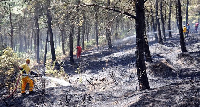 Tekirdağda 50 dönüm ormanlık alan kül oldu
