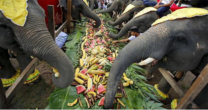 Dünya fil günü kutlandı