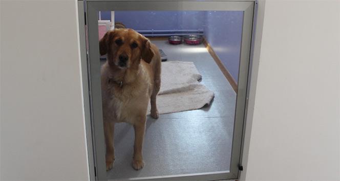 Köpeklere özel otel: Yok yok !