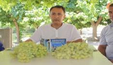 Tripolis Antik Kentte çekirdeksiz üzüm festivali yapılacak