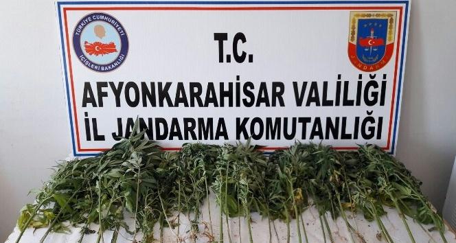 Jandarmadan köye uyuşturucu madde operasyonu