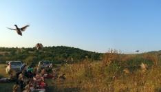 Edirnede 2 bin 500 sülün ve keklik doğaya salındı