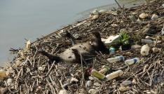 Uzmanlar, Büyük Menderes Nehrindeki tehlikeye dikkat çektiler