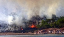 Ayvalıktaki orman yangını kontrol altına alındı