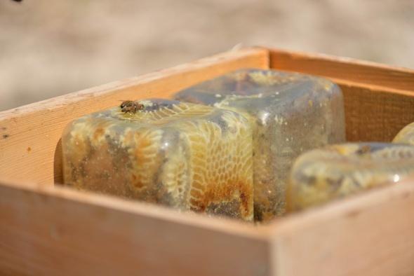 Cam kavanozda ve kütüğün içinde üretilen ballar hayrete düşürüyor