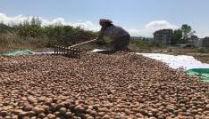 Üretici fındık fiyatına tepkili