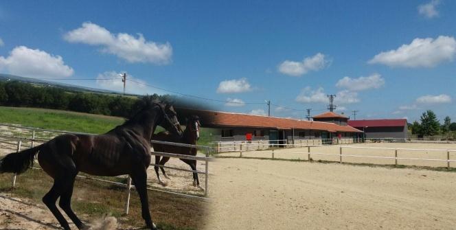 Silivri'de kurtlar köye indi, milyonluk atlar telef oldu