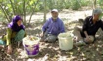 Fındık işçileri, Sakarya'daki kazanın son olmasını istiyor