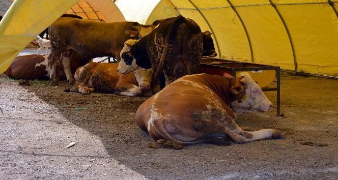 Kırıkkale'de kurban pazarı boş kaldı