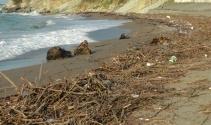 Kışlık odunlar kumsaldan