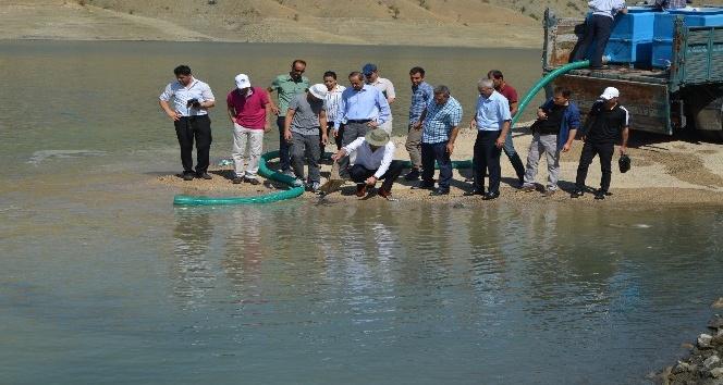 Alkumru Baraj göletine yavru sazan balıkları bırakıldı