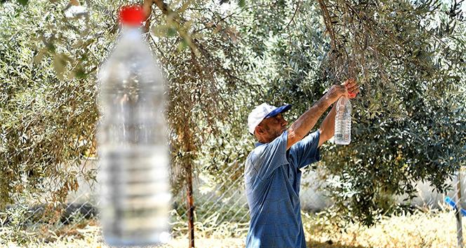 50 bin zeytin ağacı kurtuldu
