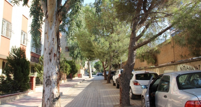 Yol ortasındaki ağaçlar şaşırtıyor |Manisa haberleri