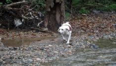 Selde kaybolan vatandaş için köpekle arama yapıldı
