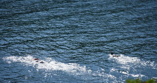 Boğulmak üzere olan vatandaşı dalgıçlar kurtardı
