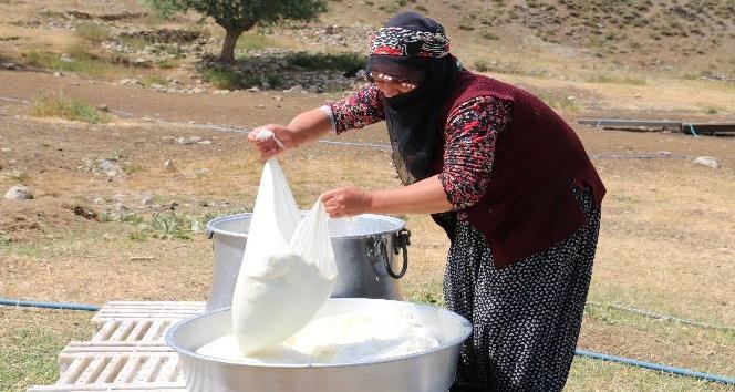 Yayladan Gelen Lezzet: Erzincan Tulum Peyniri