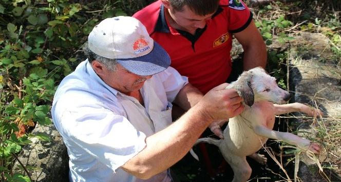 Kuyudaki mazgala sıkışan yavru köpeği itfaiye kurtardı