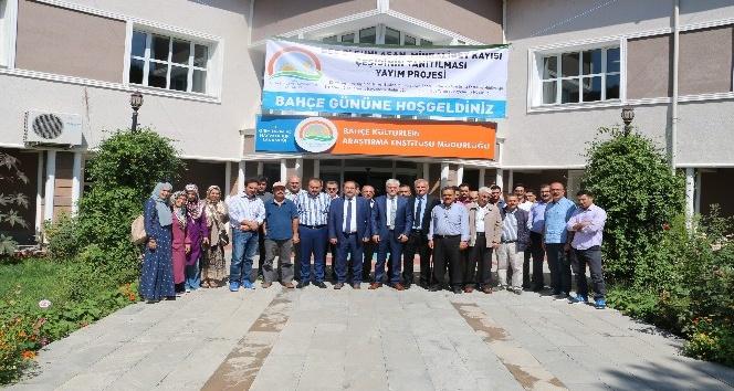 Erzincan'da Eylül'de Kayısı hasadı