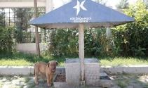Sokak hayvanları bu istasyonlarda ihtiyaçlarını karşılıyor