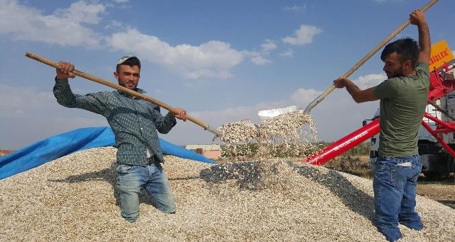 Kayseri Şeker çerezlik ayçiçeği sektöründe de lider olacak