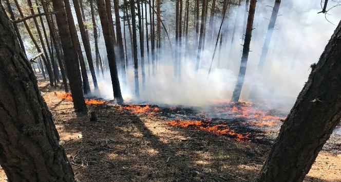 Sarıkamış ormanları 3 gündür yanıyor