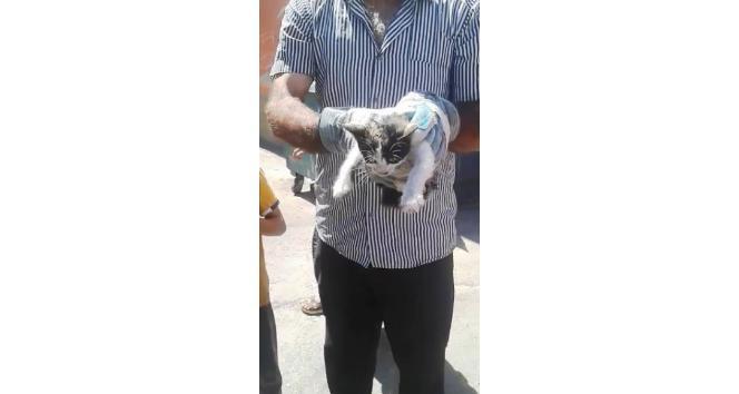 Otomobilin motoruna sıkışan yavru kedi için vatandaşlar seferber oldu