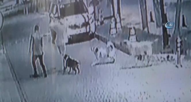 Köpek gençlere böyle saldırdı