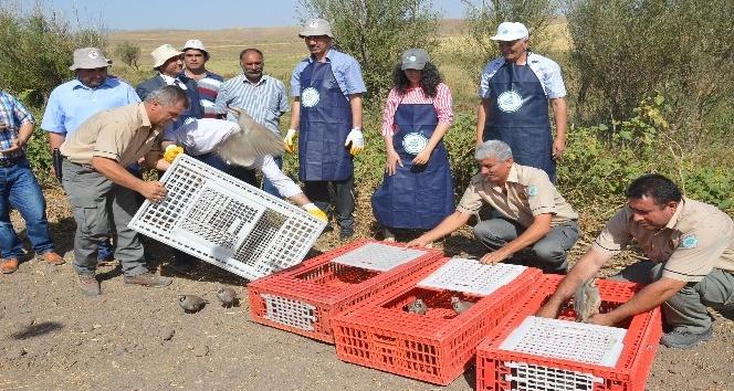 Kırıkkale'de bu yıl 2 bin 500 keklik doğaya salındı
