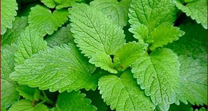 Sinir sisteminizi doğal bitkilerle rahatlatın
