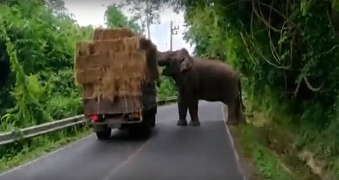 Fil kamyondan saman balyası yürüttü