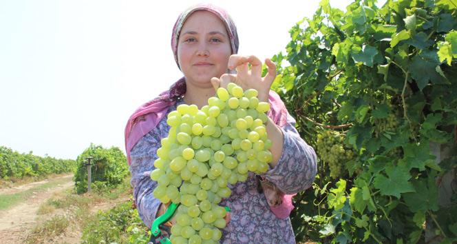 Türkiyenin organik ürünleri Manisadan