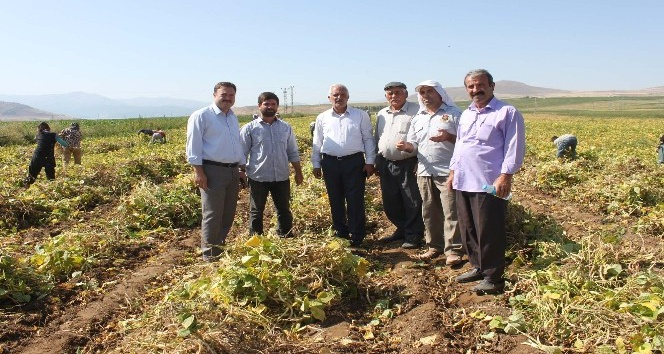 Bitlis, fasulye üretiminde artık söz sahibi