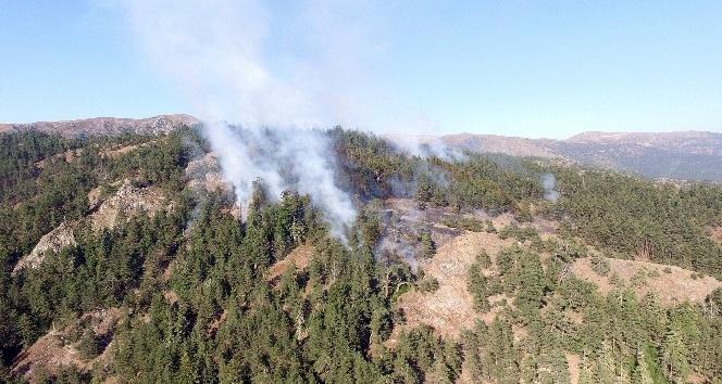Gümüşhane'deki orman yangını
