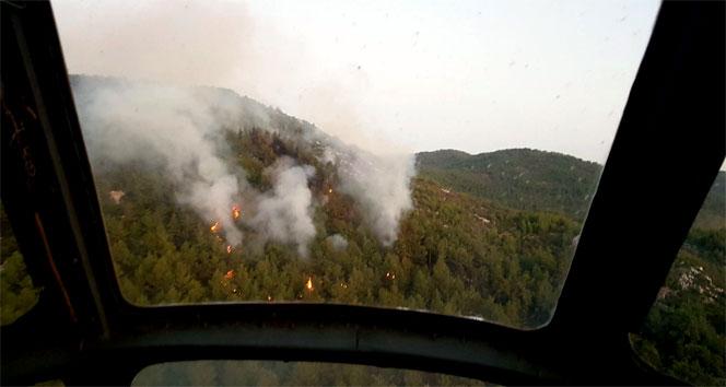 Muğla Milasta orman yangını