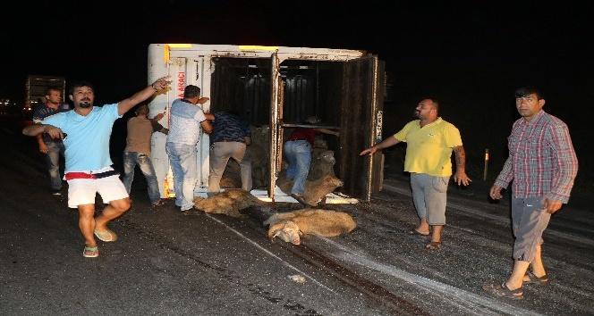 (Özel Haber) Hayvan yüklü kamyonda can pazarı yaşandı