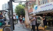 Marmara'dan 2 köpek balığı çıktı