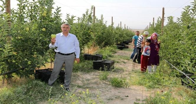 Ömer Halisdemir Üniversitesi elma hasadına başladı