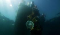 Marmaradaki mercanlar böyle kurtarıldı