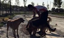 Ormanda aç kalan köpeklere bisikletle mama götürüyorlar