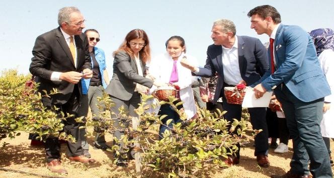 Kanser savaşçısı bitki artık Türkiyede de üretiliyor