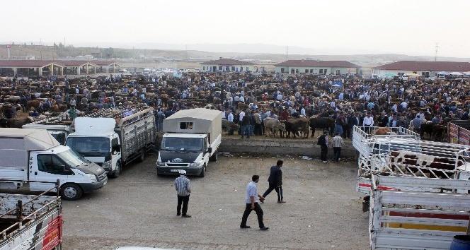 Yükselen saman fiyatları hayvan pazarını olumsuz etkiliyor