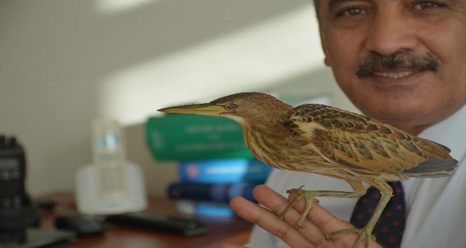 Hint Gölet Balıkçıl kuşuna zabıta ekipleri sahip çıktı