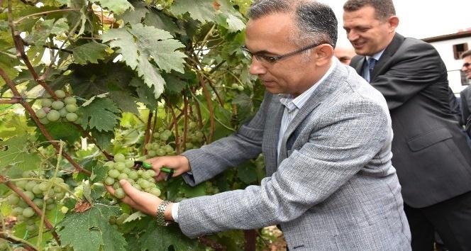 Safranbolu'da Bağbozumu etkinliği
