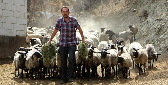 Ukrayna'dan beşiz doğuran koyun getirdi, siparişlere yetişemiyor
