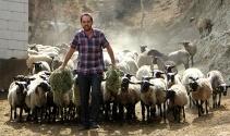 Ukraynadan beşiz doğuran koyun getirdi, siparişlere yetişemiyor