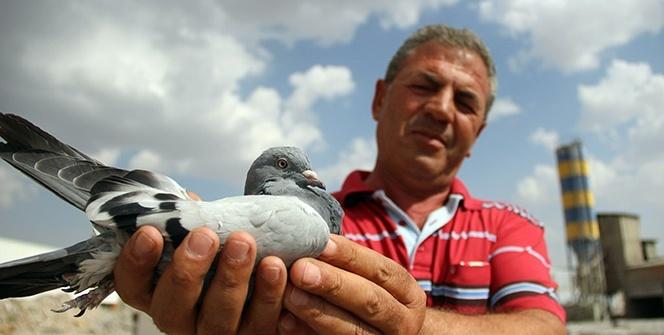 Bulduğu taklacı güvercinin sahibini arıyor