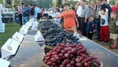 3. Trakya Bağ Bozumu Festivalinde üzüm güzeli seçildi