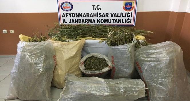 Kurutulmaya bırakılmış 40 kilogram esrar ele geçirildi