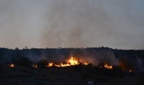 Adanada makilik alanda yangın