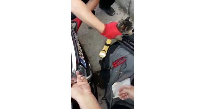 Araç kaputuna sıkışan minik kediyi itfaiye ekipleri kurtardı